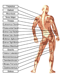 anatomy list